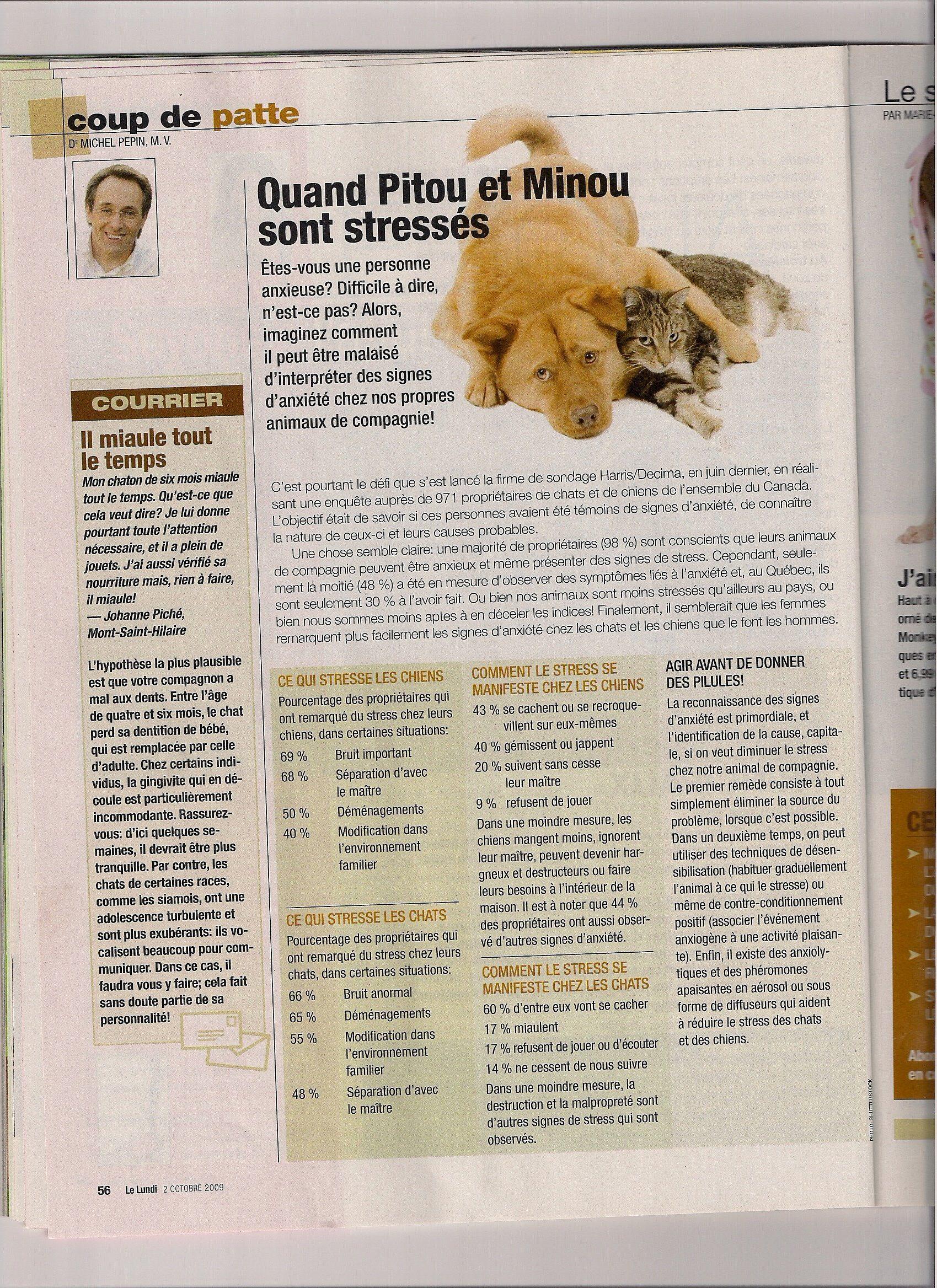 Quand Minou et Pitou sont stresses - Magazine Le Lundi