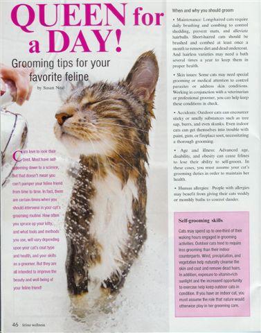 Qtip in Feline Wellness magazine